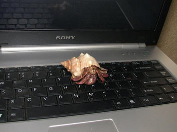 crab on a keyboard.jpg