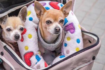 dogs-in-stroller.jpg