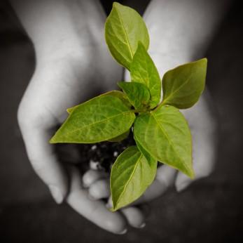 iStock_000005952276XSmall hands hold plant.jpg