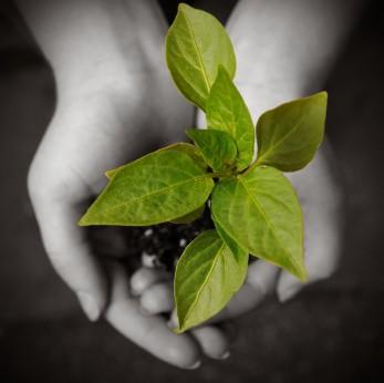 iStock_000005952276XSmall hands hold plant.jpg