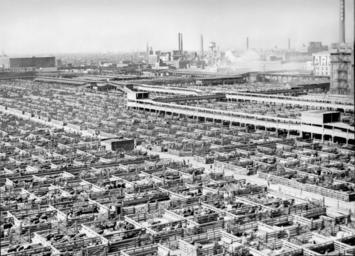 livestock_chicago_1947.jpg