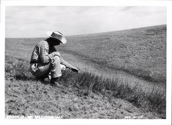 patch-of-prairie-sand-reed-grass-05237c-1600.jpg