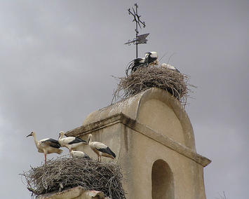 stork-nest.jpg