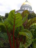 Vermont State House Garden.jpg