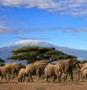 elephant-herd.jpg