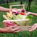 fruit and vegetable basket offering - iStock_000004898669XSmall.jpg