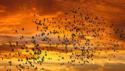 migrating-birds-sunset.png