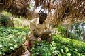 ugandan-farmer-produce.jpg