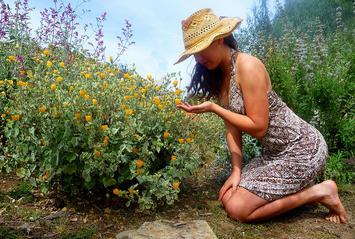 Drought tolerant California garden.jpg