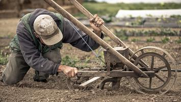Field-plow.jpg