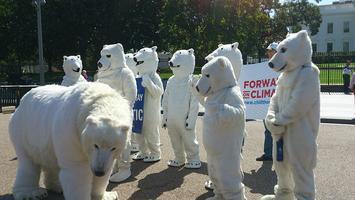 Polar_bear_protest_(10032082375).jpg