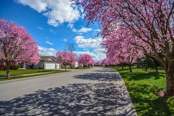bright-daylight-flora-533416.jpg