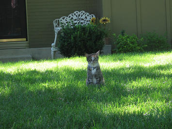 cat on a lawn.jpg
