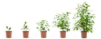 iStock_000007302699XSmall-growing potted plant.jpg