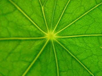 plant-capillaries.jpg