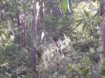 sheldon-forest.jpg