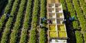 farm-workers_USDA.jpg